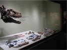68 Millionen Jahre alter Baby-T-Rex